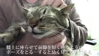 【茶番】猫を子猫っぽく幼く撮る方法MarkⅡ