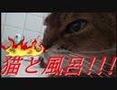 【アビシニアン♀17才.猫】 風呂入りながら猫と遊んでみました。【水大好き猫】