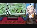 あかりの家庭菜園(オクラ編)Part3