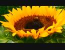 萩原崇智のミツバチの蜜集め