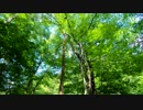 東北ずん子とgungunGUNMA釣り修行#8「梅雨前の新緑渓流」