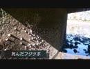 「池の水ぜんぶ抜く」の被害 大村公園の池とボラが放された池【転載】