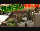 100円ショップに売ってるサボテンを食べてみよう!