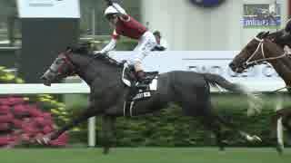 2019 競馬 上半期総集編 フェブラリー~宝塚記念 Japanese Horseracing Summary