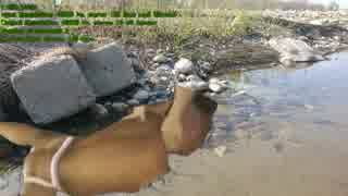 河原で遊ぶドラゴン田中b