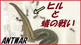 アリVSウマビル~小さいアリのとっておき~