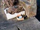 平成29年2月14日16日 集団ストーカーに敷地にごみを置かれ不法投棄禁止の立札を立てられました