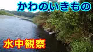 073【水中観察】かわのいきもの