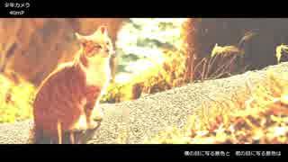 【KAITO】少年カメラ【カバー】