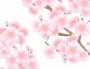 【手描き紙芝居】小泉八雲「十六桜」より