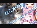 琴葉葵の猫かわいい【VOICEROID】