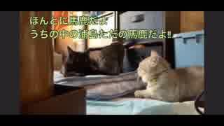 【音量注意】姉妹の妹妄想昔話 第1話「浦島太郎」
