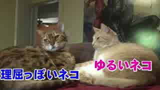 猫が猫の素晴らしさを語る不思議な動画
