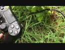 【ペット】PS4コントローラと散歩してみた。