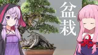 琴葉茜の闇ゲー#74「闇の盆栽」