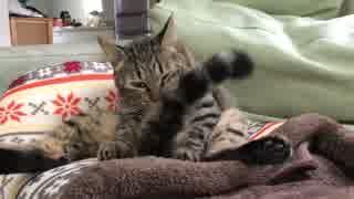 猫ドーム争奪戦争、勃発する