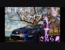 【結月ゆかり車載】ひき旅!第08話「海津大崎さくらドライブ編」