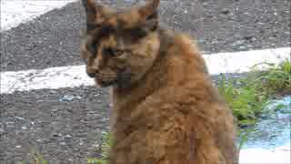 何かを警戒し続ける野良猫