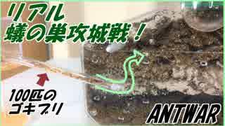 リアル蟻の巣攻城戦!アリの巣に侵攻する100匹のゴキブリ。