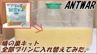 蟻の巣観察キットの砂を全部プリンに入れ替えてみたらどうなる?