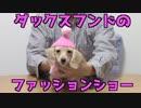 【犬のファッション】カニンヘンダックスフンドのファッションショー(プリン 2017年 冬)(YouTubeで『ワンチュー犬』と検索!)