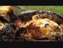 チキンの塩釜焼き