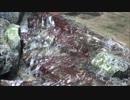 【動画素材】谷川の流れ ループ 2