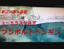 新江ノ島水族館 ユーモラスな泳ぎフンボルトペンギン