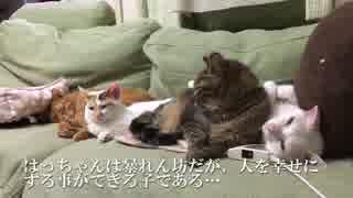 破壊姫猫、宇宙猫兄弟との忘れ得ぬ日々