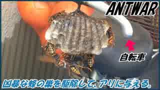 自転車のハンドルに住み着いた凶暴なハチの巣を駆除して、アリに与える。