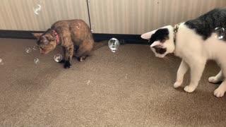 猫に割れないシャボン玉を飛ばしてみたら?