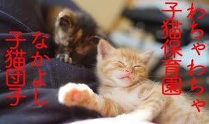 子猫保育園、お昼寝タイムの猫団子