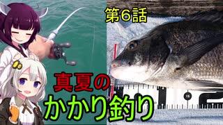 海から遠くても海釣りに行きたい⑥ 真夏のかかり釣り