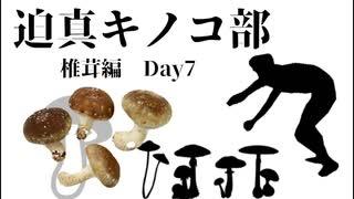 迫真キノコ部・しいたけ栽培の裏技 Day7
