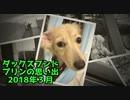 【思い出】ダックスフンド プリンのアルバム集(2018年3月)(YouTubeで『ワンチュー犬』を検索!)