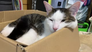 ほっぺたはみだして寝る猫