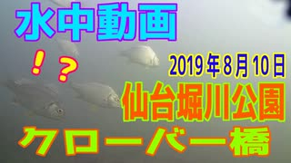 水中動画(2019年8月10日)in 横十間川(仙台堀川公園&クローバー橋)