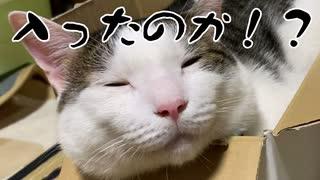 猫に実験 4か月前に入っていた箱に今も入れるか?