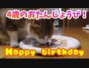 うちに居ついた半野良猫の4歳の誕生日です(*'▽')