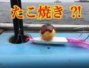 たこ焼きでタコを釣る?!タコ船後半戦!【もっち釣動組合♯5...