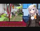 あかりの家庭菜園(オクラ編)Part5