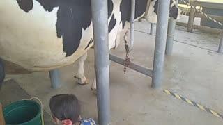 牛の乳搾りに発挑戦したよ! うだアニマルパークにて
