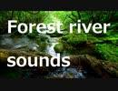 渓流のせせらぎと小鳥のさえずり《30分》(作業用BGM・睡眠用BGM・ASMR)