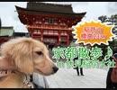 【京都散歩】伏見稲荷大社の稲荷山の山頂を犬と目指してみた!