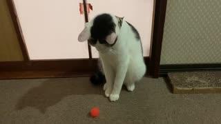 猫にキャッチボールに無理やり付き合ってもらった