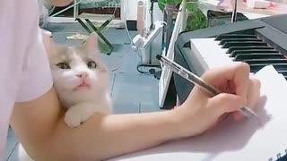 cute cat wants attention - 可愛い猫