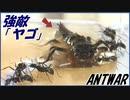 オニヤンマの幼虫「ヤゴ」vsトゲオオハリアリ~水辺での戦い~