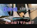 【検証】犬と一緒に新幹線って乗れるの?(YouTubeで『てぃかし 』を検索)
