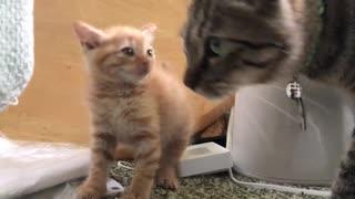 ジャンボ子猫、わちゃわちゃ子猫にビビる