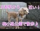 【公園散歩】水族館、カフェ、レストラン意外と色々ある!京都の梅小路公園